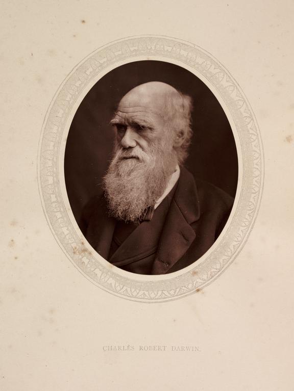 'Charles Robert Darwin', 1878       A photographic portrait of the scientist Charles Darwin [1809-1882] taken by Samuel Robert Lock [1822-1881] and George