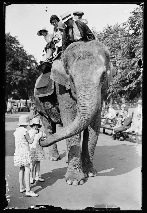 An elephant ride at the zoo       A photograph of an elephant giving a group of visitors at the zoo a ride on his back