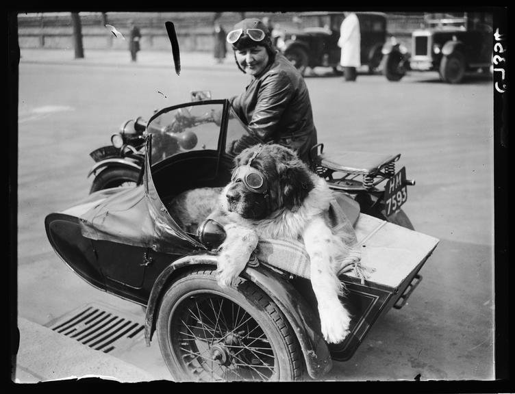 'Arriving in style for a dog show'       A photograph of Mrs L Stanborough and her pet St