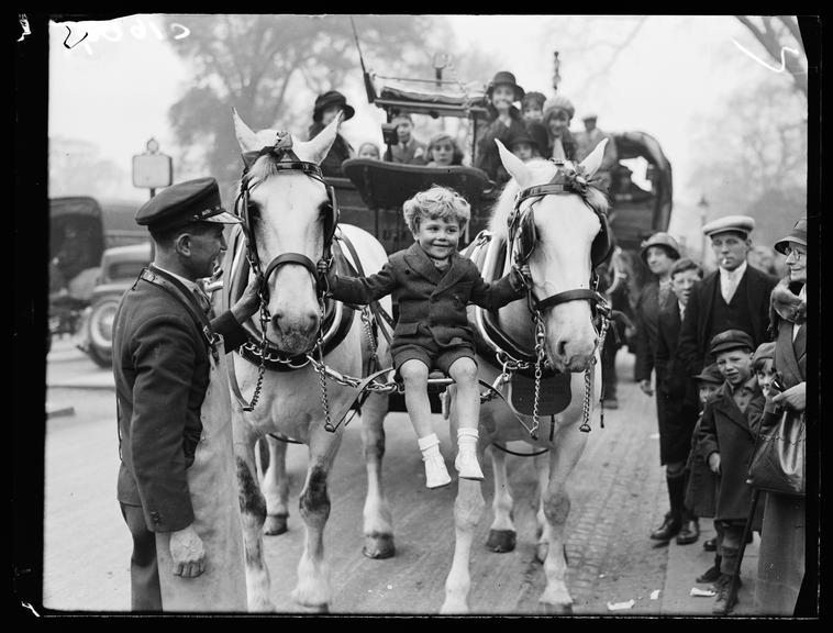 Prize-winning horses       A photograph of a little boy riding on a seat slung between the harnesses of a pair of horses