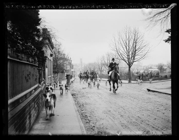 'The East Essex Hunt. Trinity Street, Halstead', 1901       A photograph of members of the East Essex Hunt riding along Trinity Street in Halstead, Essex