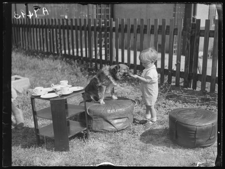 A small boy feeding a dog       A photograph of a small boy feeding a dog, taken in 1932 by Leslie Cardew for the Daily Herald.