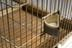Parrot cage, from ward at Sussex Lunatic Asylum/Brighton County Borough Asylum, 1859-1939.       Detail view of bird food