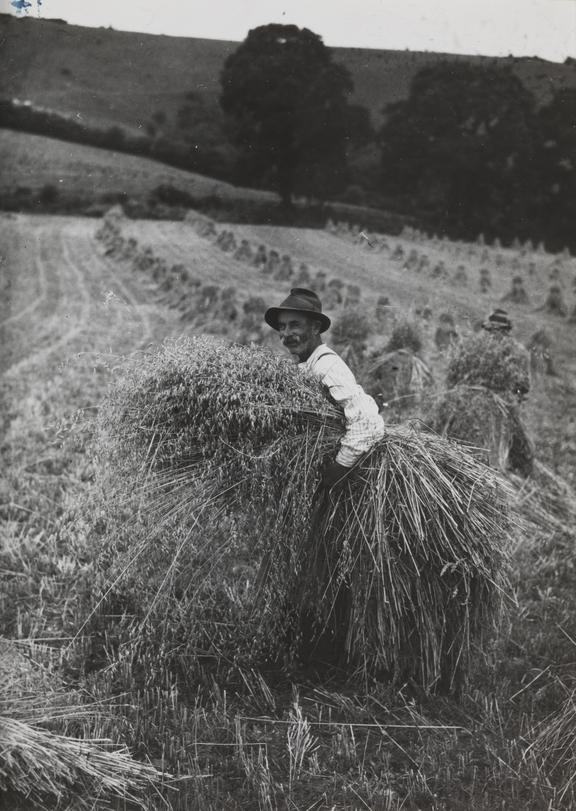 Farm worker bringing in the harvest, Sussex