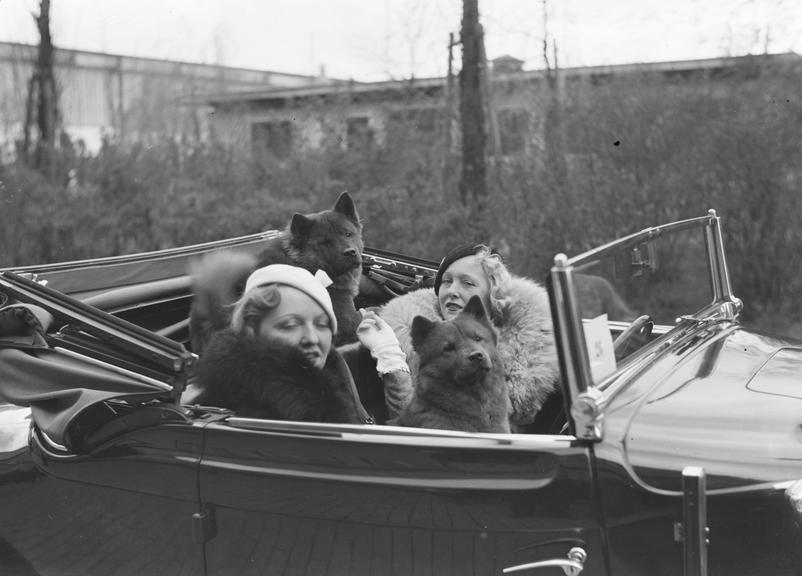 Two women and their dogs in a car
