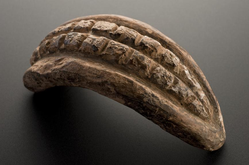 Votive mouth, showing teeth, terracotta, probably Roman, 200BC-200AD Full view, graduated matt black perspec background.