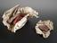 """Bundle of red cloth wrapped in paper labelled,  """"Specimens of red dye upon cotton"""" , some dated and numbered and"""