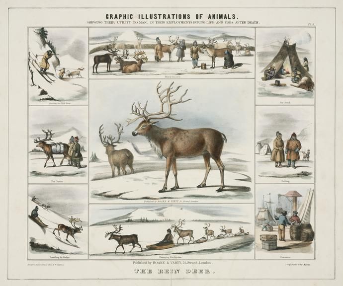 print: coloured lithograph: 'The Rein Deer' / by Benjamin Waterhouse Hawkins, [c1850], Plate IX from the volume