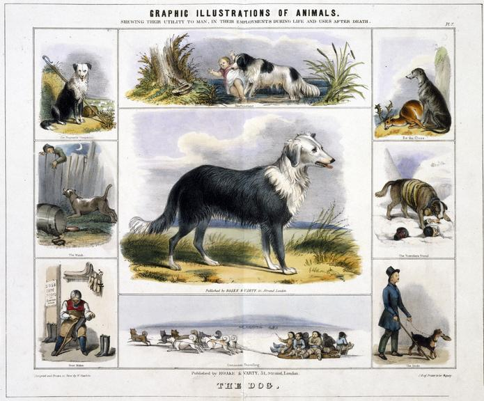 """print: coloured lithograph: 'The Dog' / by Benjamin Waterhouse Hawkins, [c1850], Plate VII from the volume """"Graphic"""