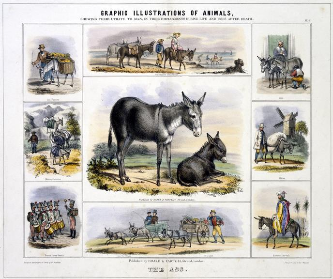 print: coloured lithograph: 'The Ass and Foal' / by Benjamin Waterhouse Hawkins, [c1850], Plate VI from the volume