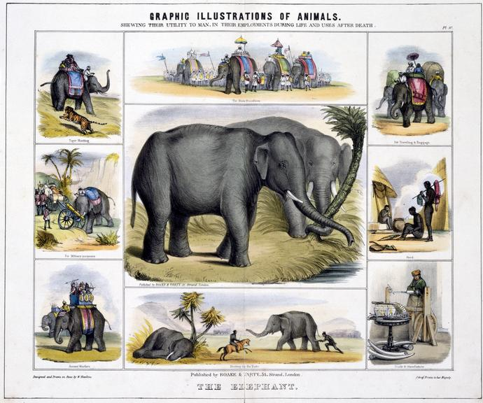 """print: coloured lithograph: 'The Elephant' / by Benjamin Waterhouse Hawkins, [c1850], Plate X from the volume """"Graphic"""