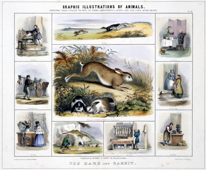 print: coloured lithograph: 'The Hare and Rabbits' / by Benjamin Waterhouse Hawkins, [c1850], Plate XIV from the volume