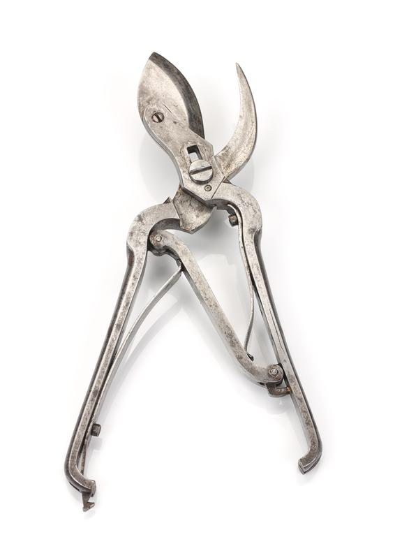 Rib shears, steel, probably French, 1820-1860. Part of a post mortem set, almost complete, in mahogany case, by