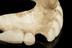 Partial upper denture, ivory, English, 1780-1860.