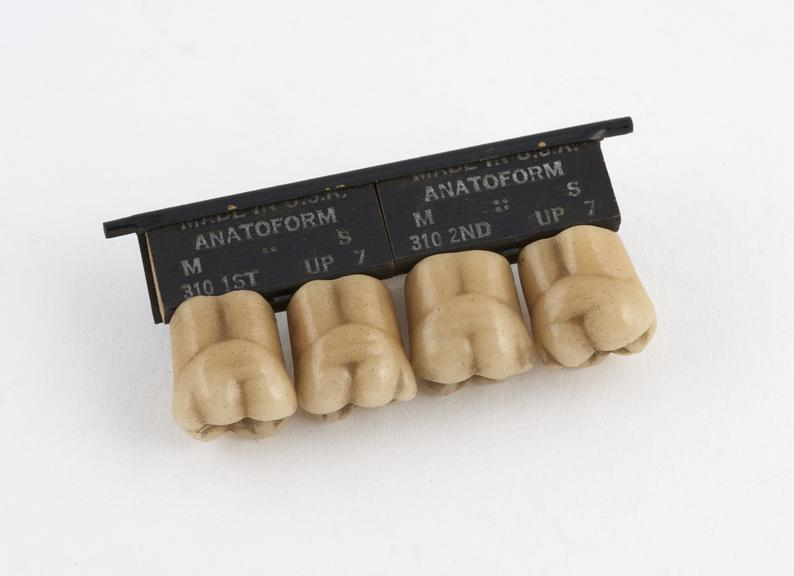 Set of 4 Anatoform' upper posterior tube teeth, by the Dentist's Supply Co., USA, 1920-1935'