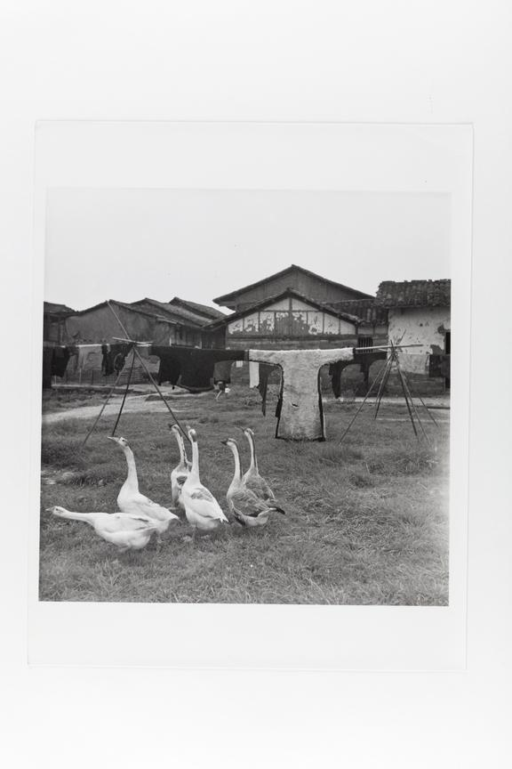 Andor Kraszna Krausz Collection. Silver gelatin copy print made ca.1970s. Photograph by Sir Cecil Beaton of a flock of