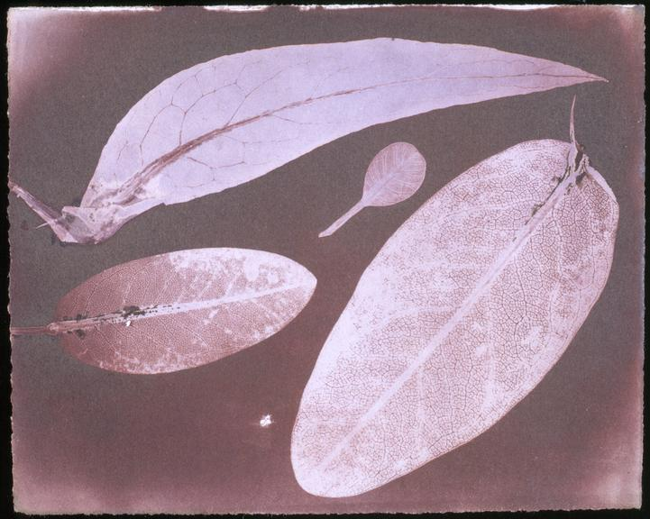 """One of Fifty-nine early prints from glass negative of 40 ft. telescope, made by Sir J.F.W. Herschel in 1839. (Size 5"""""""