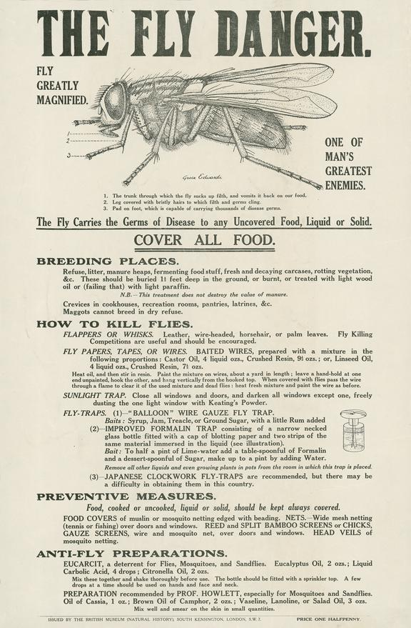 """One of 3 posters, entitled """"The Louse Danger"""" and  """"The Fly Danger"""", with illustrations by Grace Edwards, published by"""