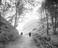 Woods at Llanbedrog near Pwllheli, Gwynedd, 1913
