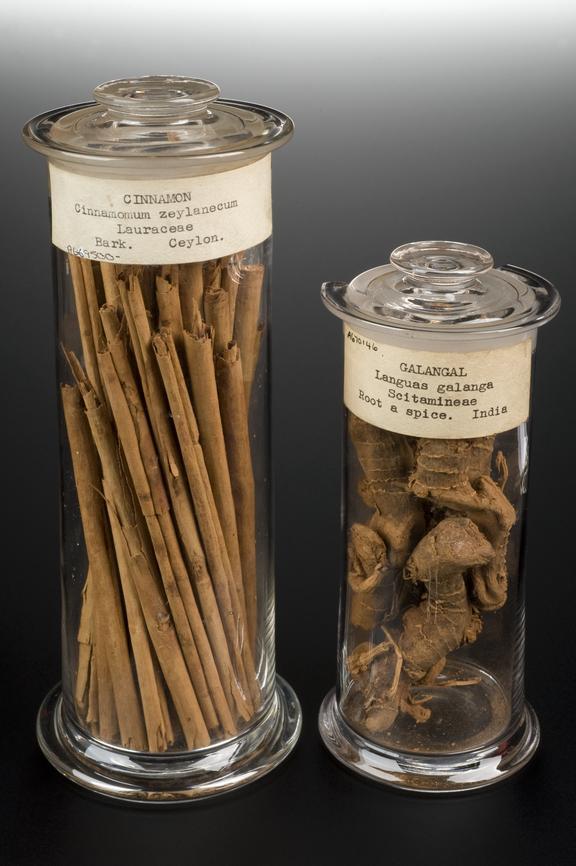 Left hand side: A669500, Glass specimen jar of Cinnamomum zeylanecum bark, Cinnamomum, Sri Lanka (Ceylon),