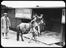 Horsebox being loaded with horse and foal.