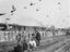 Homing pigeons being released from cages by trackside with freight (possibly pig