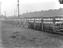 Cattle pens at North Docks, Liverpool, 4 September 1919